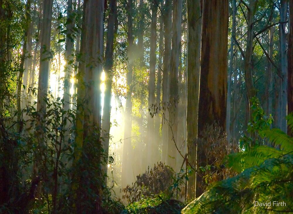 Sherbrooke Forest - Mt Dandenong Australia by David Firth