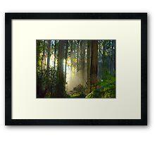 Sherbrooke Forest - Mt Dandenong Australia Framed Print