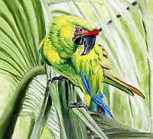 Great Green Macaw by April Webb