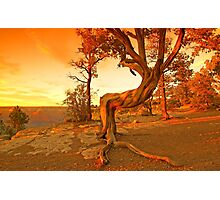 Grand Canyon Sunny Photographic Print