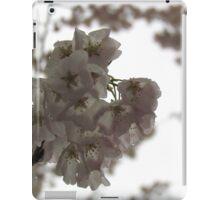 Cherry tree in springtime iPad Case/Skin