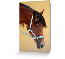 Am I just the prettiest mare? Greeting Card