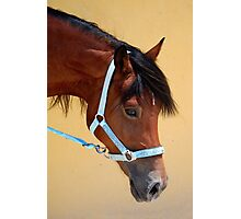 Am I just the prettiest mare? Photographic Print