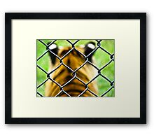 Stolen freedom Framed Print