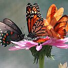 Butterfly Convention by mlynnd
