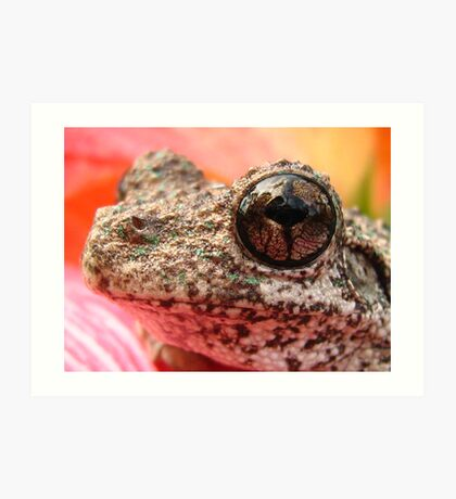 tree in frog eye Art Print