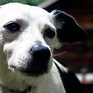 Dog's Gaze by eliaso
