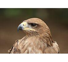 Tawny Eagle Photographic Print
