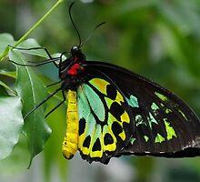 Melbourne Zoo - Butterfly House by Dean Osborne