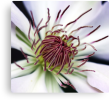 Classic White Clematis Canvas Print