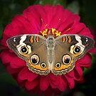 Butterflies of North America by Lisa G. Putman
