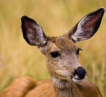 STOCK-Doe by Jay Ryser