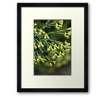 Unique Nature - Mediterranean spurge Framed Print