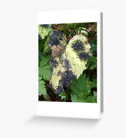 dotted Greeting Card