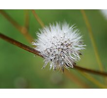 fluffy ball Photographic Print