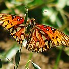 Butterfly 2 by Catherine  Howell