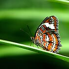 Nature's Beauty by Corrine Symons
