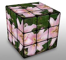 Pink Lily in Rubix Cube by Ann Persse