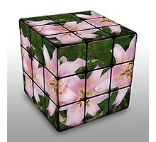 Pink Lily in Rubix Cube Photographic Print