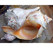 Full View Sea Shells Photographic Print
