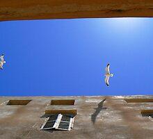 Wingspan by Diane