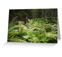bed of ferns Greeting Card