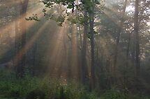 the rays by dc witmer