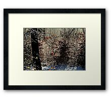 The miracle world of thaw Framed Print