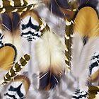 Feathers by Abeque  Wikimac