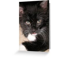 Cleo The Kitty Greeting Card