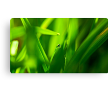 Drop of Water in Green Macro Landscape Canvas Print