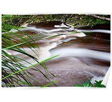 Botanical Creek, Strahan, Tasmania Poster