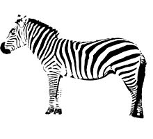 Black and ? zebra, you choose Photographic Print