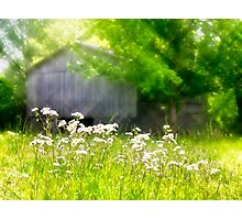 Wildflowers At the Barn Photographic Print