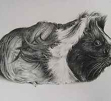 Guinea Pig by threebrownhares