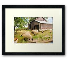 Little Sheep Framed Print