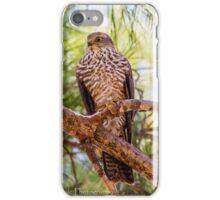 Collared Sparrow hawk iPhone Case/Skin