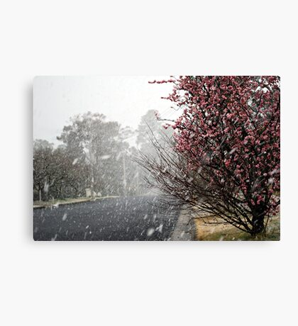 Leura Snow Canvas Print