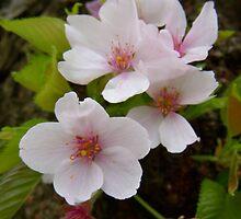 Flowers 1 by JMacsRUs
