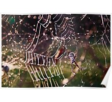 frosty spider Poster
