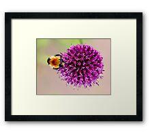 Pollen Collection Framed Print