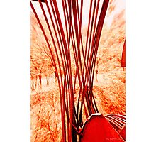 Everything Has Strings  Photographic Print