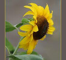 Sunny Delight by Cargomom