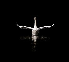 Swan by captureasecond