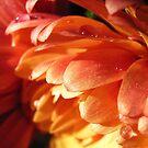 chrysanthemum by Floralynne