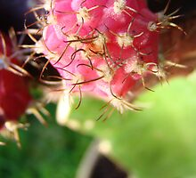 Red Cactus by Sharon Robertson