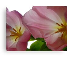 Fading Pink Tulips Canvas Print