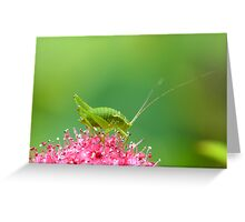 Beauty and the beastie Greeting Card