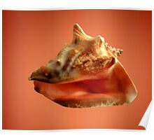 Conch Poster