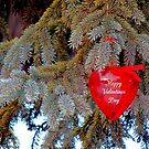 Happy Valentines Day by WildThingPhotos